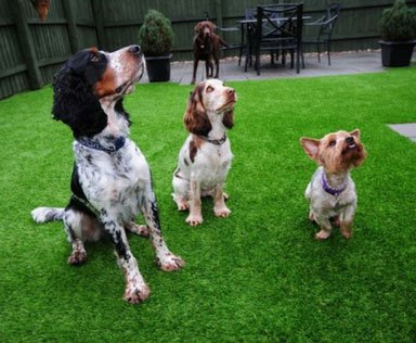 Champion DF PET TURF - Happy Dogs