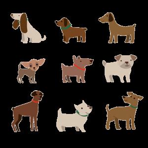 K9 CHAMPION & K9 TERRA dog images